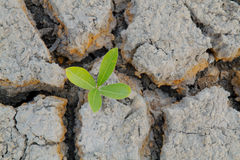 Plant in cracked earth. Stock Images