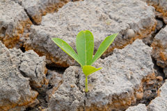 Plant in cracked earth. Stock Image