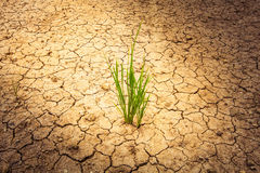 Plant on cracked soil and dry in dry season Royalty Free Stock Photos