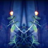 Plant Crassula Ovata with two lights Stock Photography