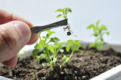 Plant cultivation agriculture Royalty Free Stock Image