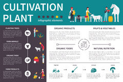 Plant Cultivation infographic flat vector illustration. Presentation Concept. Plant Cultivation infographic flat vector illustration. Editable Presentation Royalty Free Stock Image
