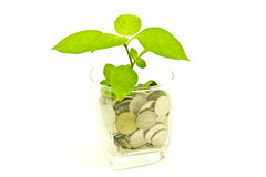 Plant and a cup of Thai coins Royalty Free Stock Image