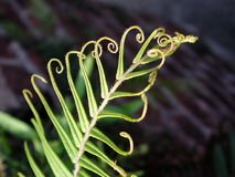 Plant in curves. Close up of a plant with curve of leaves Stock Images