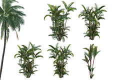 Plant 3D Collection. The collection of plants, bamboo and palm, 3D rendering Stock Photos