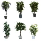 Plant 3D Collection. The collection of plants in pots, 3D rendering Royalty Free Stock Images