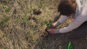 Plant de vrouwen groene activist een kleine boom stock videobeelden