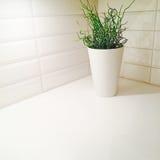 Plant decorating kitchen corner Stock Image