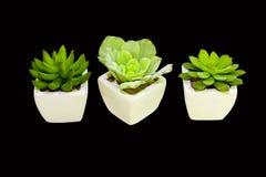 Plant decoration Stock Photography