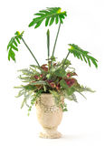 Plant decoration in clay pot Stock Photography