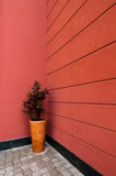 Plant in decorative vase. Plant in decorative ceramic vase with red wall background royalty free stock photo