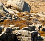 Plant  in delos greece the historycal acropolis and old ruin sit. In delos greece the historycal acropolis and         old ruin site Stock Image