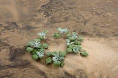 Plant in desert Royalty Free Stock Image