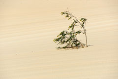 Plant in desert Stock Photo