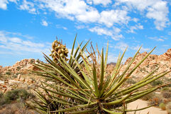 Plant in the desert Royalty Free Stock Images