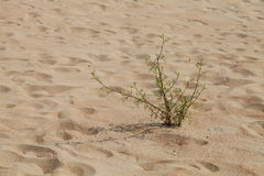 Plant in a desert Royalty Free Stock Images