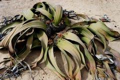 Plant in desert sand Stock Image