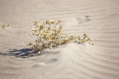 Plant in the desert sands Stock Photo