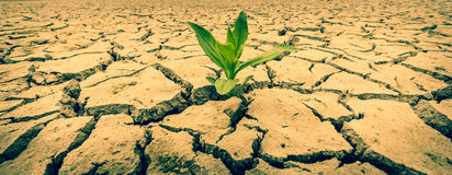 Plant  in the desert Stock Photography
