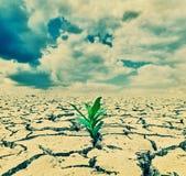 Plant  in the desert Stock Image