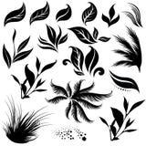 Plant design elemets Stock Image