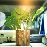 Plant on the desk Royalty Free Stock Images