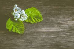 Plant detail on wood, nature. Blooming flower stock image