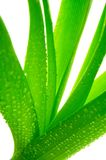 Plant with dew Royalty Free Stock Photos