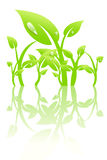 Plant with dew. Vector illustration Stock Images