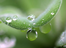 Plant with dew drops Stock Images