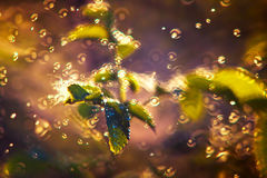 Plant in dew Royalty Free Stock Photography