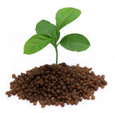 Plant in Diammonium phosphate fertilizer Royalty Free Stock Photo