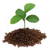 Plant in Diammonium phosphate fertilizer. Over white background royalty free stock photo