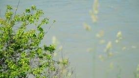 Plant dichtbij Katun-Rivier stock videobeelden