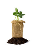 Plant and dirt Royalty Free Stock Photography