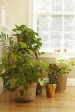 Plant display Royalty Free Stock Photo