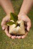 Plant dit boomzaad stock fotografie