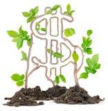 Plant Dollar Royalty Free Stock Photo