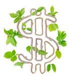 Plant Dollar Royalty Free Stock Photography