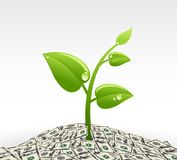 Plant and dollars, Eco-friendly abstract background vector stock illustration. Plant and dollars, Eco-friendly abstract background . vector stock illustration Royalty Free Stock Photos