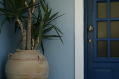 Plant by the door Stock Images