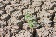 Plant in dried cracked earth Royalty Free Stock Image