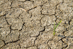 Plant in dried cracked mud Royalty Free Stock Photography