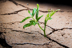 Plant in dried cracked mud. Stock Image