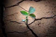 Plant in dried cracked mud. Royalty Free Stock Photos