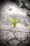 Plant in dried cracked mud. New life. Stock Image