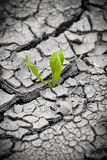 Plant in dried cracked mud. New life. Royalty Free Stock Images