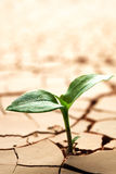 Plant in dried mud Royalty Free Stock Image