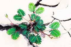 Plant in dried mud Stock Photo