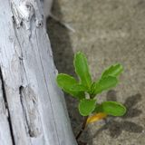 Plant and driftwood Stock Image